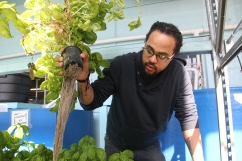 """Pratt lifts a plant out of one of the aquaponic systems to show how the roots grow freely in the water. He describes Sweet Water Foundation as a """"hybrid model of art and science."""" (Anne Evans/MEDILL)"""