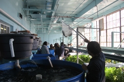 """Pratt holds up one of the fish for a student tour group to see as he explains how the aquaponics system works. """"Aquaponics is kind of this symbiotic, recirculating water ecosystem where you feed the fish, they eat, and they fertilize the water,"""" Pratt said. (Anne Evans/MEDILL)"""