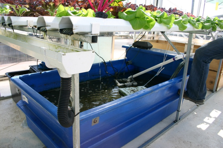 An aquaponic device, similar to the ones made by The Sweet Water Foundation. Photo by Ryan Somma