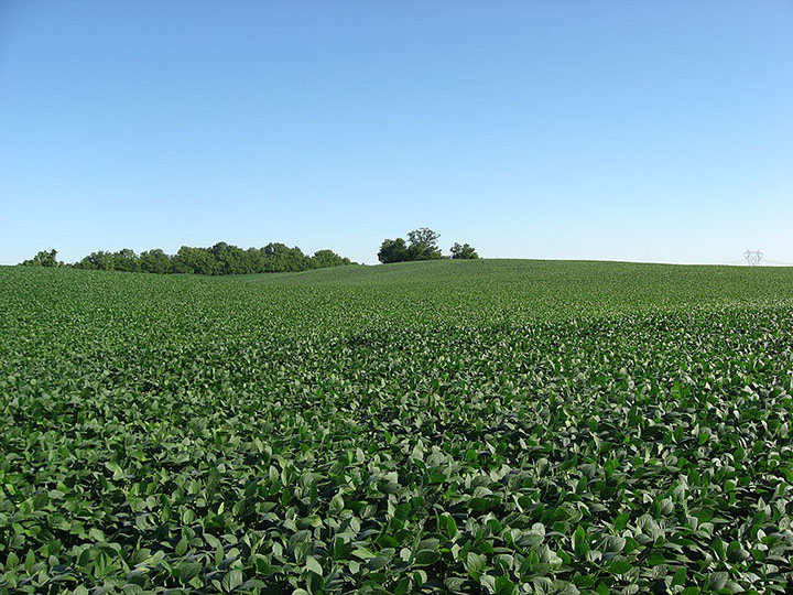 Monsanto's soybean seeds more than doubled in sales.