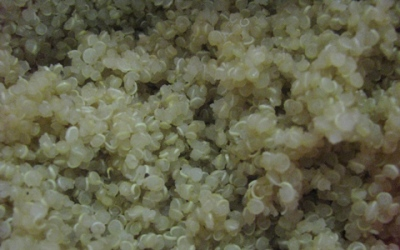 Quinoa contains protein and can substitute as a side dish instead of stuffing. Photo by Katherine Dempsey
